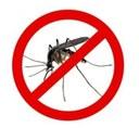 Parte dal prossimo 29 giugno il primo ciclo di disinfestazione adulticida contro gli insetti alati sul centro abitato e frazioni